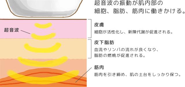 超音波美顔器の振動を利用したマッサージ効果の解図